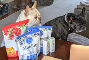 I also think the Frenchies are looking intently at the chews.