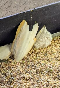 Cuttlebone is an important dietary supplement for birds because it is a great source of necessary minerals and calcium, which helps birds with bone formation and blood clotting. Birds can use cuttlebones to help keep their beaks trimmed and sharp. I provide several at the bottom of the cage.