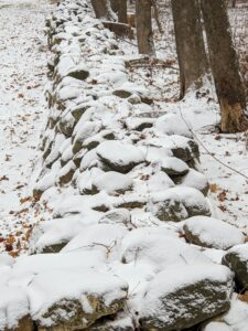Here is one of the old stone walls at the farm. New England is filled with stone walls - thigh-high stones stacked together in various shapes and sizes. Many old stone walls are left from colonial settlers building their farmlands.