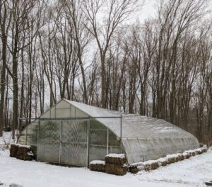 This is the citrus greenhouse. With frigid cold temperatures on the way, I am glad all my precious dwarf citrus trees are safe and warm indoors.