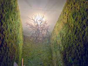 """And here is another view of three walls of the """"moss room."""""""