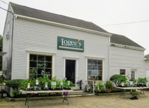 If you're ever in the area, stop by Logee's Tropical Container Plants for Home and Garden in Danielson, Connecticut - it's filled with so many wonderful botanical gems. And be sure to check out their web site and catalog - there is something there for everyone.