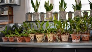 The fast-draining mix feeds plants for up to six months. These are some newly repotted orchids - use the mix when repotting orchid types that require drier conditions between waterings.