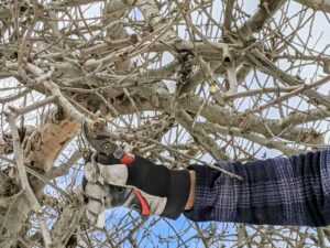Domi removes crowded branches to help let in light and promote good air circulation.