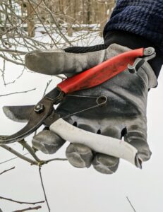 I always prefer hand tools that will give my trees a more natural appearance and shape. Smaller twigs are snipped off with regular secateurs. Each member of my outdoor grounds crew has a pair.