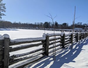 The 100-year old white spruce fencing has many new cedar uprights now supporting it. I love how the snow collects on the fence rails. I have photographed sections of this beautiful fence many times through the seasons.