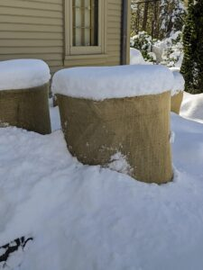 The faux bois urns behind my Summer House are also protected under burlap, though several inches of snow surround it and cover the tops.