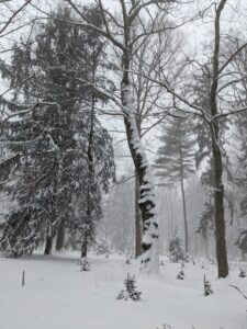 This snow also stuck well to the trunks of these tall trees showing which way the wind was blowing.