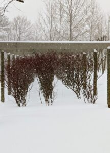 However, these blueberry bushes under a smaller pergola between the Equipment Barn and my flower garden add a bit of color to all the white and gray of this winter's day.