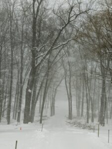 This carriage road into the woods with the naked tree branches overhead looks rather eerie during the snowstorm.