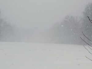 This is the back hayfield. By early afternoon, there were total white out conditions, defined by low visibility making almost everything indistinguishable.