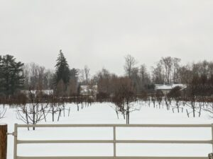 Here's a look into the snow-covered orchard where I have more than 200 fruit trees planted - apple trees, plum trees, cherry trees, peach, pear and quince trees.
