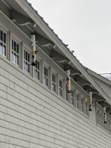 There is a lot of activity behind my carport, where I keep a long row of bird feeders for the visiting wild birds. In winter, my bird feeders are refilled every morning. It's important to keep feeders full as birds often seek out reliable food sources to help them survive the colder months.