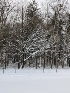This weather system left all the tree branches heavily dusted with snow.