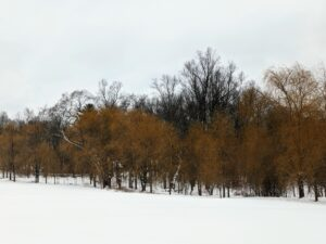 This is one of two lower hayfields – this one edged on one side with the weeping willows. They add a golden hue to the winter landscape. How much snow did you get? Share your comments in the section below.