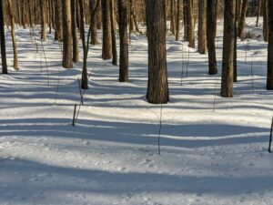 This is a view looking into the woods – the ground covered with a blanket of snow. I hope all of the creatures are keeping warm in their woodland dens.