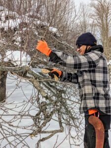 In general, when pruning always encourage branches to grow toward the outside of the tree and eliminate those that grow toward the center or cross other branches. Air and light need to penetrate the foliage to the center of the tree as much as possible.