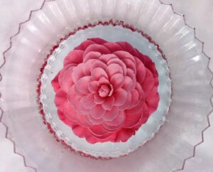 And look at 'Elizabeth Weaver' - I love how the bold pink looks in this bowl surrounded with snow. Camellias have a reputation for being somewhat difficult to grow, but if one is willing to meet their needs, they'll reward you with a long bloom season just when you need it most. The countdown is on - just 22 days until spring.