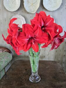 These red amaryllis were in my newly decorated sitting room - be sure to check in on my blog tomorrow and this weekend for more photos of this finished space - you'll love it.