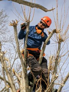 Pasang is trained in climbing trees and wears all the necessary safety equipment including gloves, a helmet, eye protection, and a body safety harness.