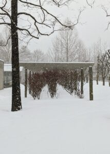 These blueberry bushes under a small pergola between the Equipment Barn and my flower garden add a bit of reddish color to all the white and gray of this winter day.