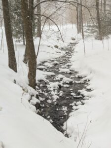 Here is a gurgling stream peeking through the blanket of white. The woodland streams are full – they look so dark against the snow.