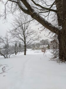 Here is a view looking back from the carriage road toward my Winter House and through the tree peony bed under the carpet of snow.