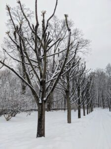 The branches look so pretty outlined in snow. I am looking forward to seeing the dense heads of foliage come spring.