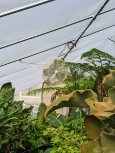 Fans are strategically placed around the greenhouse to help circulate the air. When temperatures hit 50-degrees Fahrenheit outside, we open the doors just a little for some fresh air.