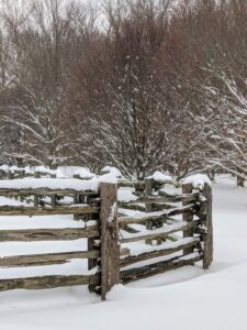 The antique fencing that surrounds my horse paddocks looks beautiful in any season. Visitors always ask me about it. This side borders my grove of American beech trees, Fagus grandifolia.
