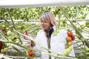 Here I am sampling some of AppHarvest's tomatoes. These tomato plants grow up to 40-feet tall. All AppHarvest tomatoes are grown with 100-percent recycled rainwater, thanks to a retention pond that's the size of nearly 70 Olympic swimming pools. The rainwater is filtered with UV and sand before being delivered in precise amounts to the company's tomato plants. (Photo by Aaron Conway)