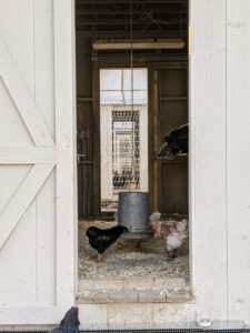 I started raising chickens when my daughter, Alexis, was just a little girl, and I've been hooked ever since.