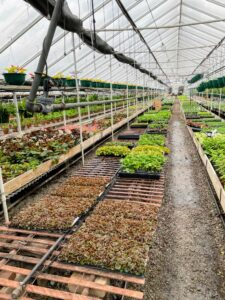 Ryan toured some of the greenhouses. In this one, aisles of begonia and geranium cuttings ready for production.