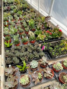Pemberton's also offers a huge variety of assorted succulents.