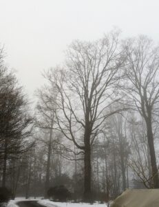 "Fog is most likely to occur at night or near dawn when the temperature of the day is normally at its lowest. Some describe fog to be ""as thick as pea soup"". This was originally used to describe the dingy yellow smog from burning soft coal common in Europe. Such fogs occurred in London until the Clean Air Act of 1956."