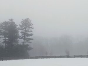 This is a view of the tree line from across the pastures – it's very hard to see any trees except the Eastern white pines on the left, but on a clear day, the view is gorgeous.
