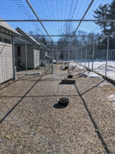 I have a large chicken yard next to my vegetable garden. I recently replaced all the fencing surrounding the coops and added more gravel. The area is clean and very safe for my flock.