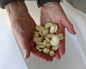 To make the brine, I started with 20 cloves of garlic grown right here at my farm. I dropped all the cloves into the bin.