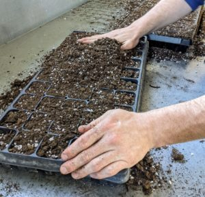 Ryan spreads the soil mix across the trays, making sure every cell is filled. The mix should be level with the top of the tray.