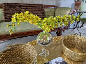 A vase of cut Cymbidium orchids sits on this coffee table. I love the golden-yellow blooms. Cymbidium, or boat orchid, is a genus of more than 50-evergreen species in the orchid family Orchidaceae. Cymbidium orchids are prized for their long-lasting sprays of flowers, used especially as cut flowers or spring corsages.