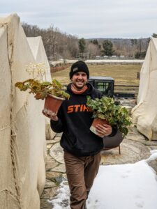 Meanwhile, Brian carries two houseplants through my expansive porch entrance on the upper terrace parterre. This process is done quickly to keep the plants out of the cold as much as possible. Don't worry, Brian just pulled down his face covering for this photo.