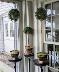 And here are some taller topiaries sitting on pedestals on my porch.