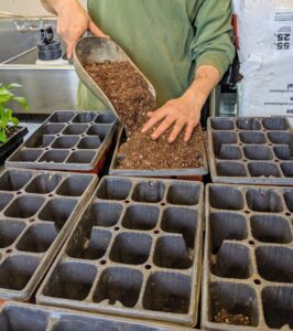 Brian prepares a series of flats with larger potting cells. The growing seedlings will be moved into these slightly larger trays.