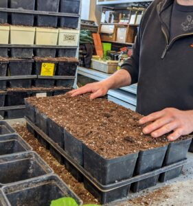 These flats have individual pots which will accommodate seedlings in a different stage of growth and those that grow more quickly. Experiment with pots to see which ones work best for what plants. And, always choose containers or trays that have proper drainage holes at the bottom. Johnny's offers a huge variety of seedling trays and containers.