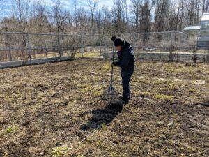Phurba rakes the back quadrants using a soft rake so as not to damage any of the perennials.