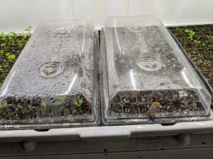 After a few days, Ryan checks in on the growing seeds. It is fascinating to see how much the plants develop from day to day.