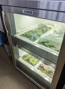 I also have two smaller Urban Cultivator residential units in this head house. Those units each take up the same footprint as a dishwasher and are plumbed to water and electrical in the same way. I also have two smaller units in the head house. In this Urban Cultivator, Ryan is propagating begonias through a process of leaf layering - rooting cut leaves from the mature plants.