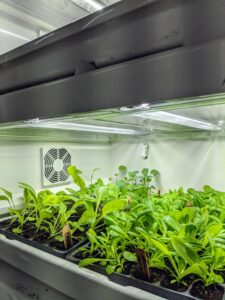 This process is so great to watch and allows us to start many seeds for the gardens. Here, one can see how much room the Urban Cultivator provides for growing.