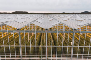 Here is a bird's eye view of the AppHarvest farm. It utilizes a hybrid lighting array that uses natural sunlight first and then supplements it with LED lighting and high-pressure sodium lighting, the latter of which produces heat to help warm the facility in cooler months. (Photo courtesy of AppHarvest)