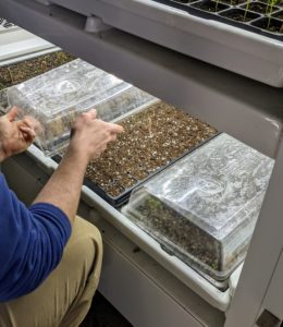 Ryan covers both of the newly seeded trays with humidity domes. These domes remain positioned over the seed trays until germination begins.